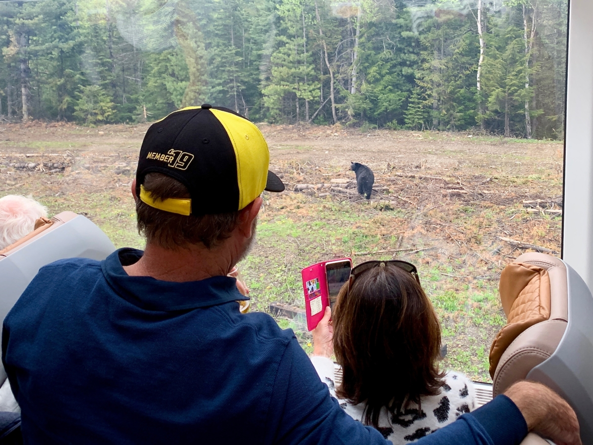 Rocky Mountaineer Train Wildlife - All Aboard the Rocky Mountaineer! An Insider's Guide to Your Journey by Rail